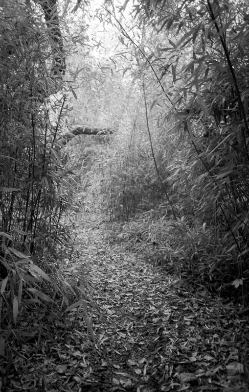 Louisiana Garden-5.jpg