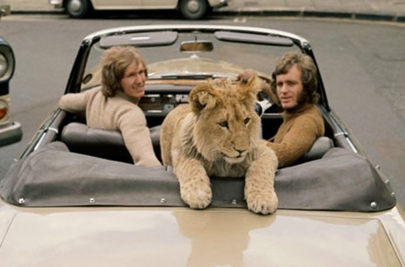 christian-the-lion-in-london-590x390.jpg