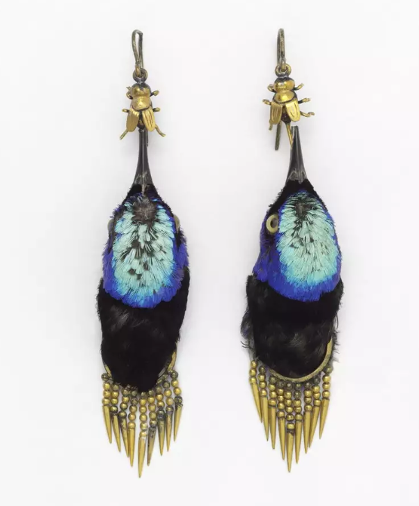 And in the wrong place...  Earrings made from heads of Red Legged Honeycreeper birds, circa 1875