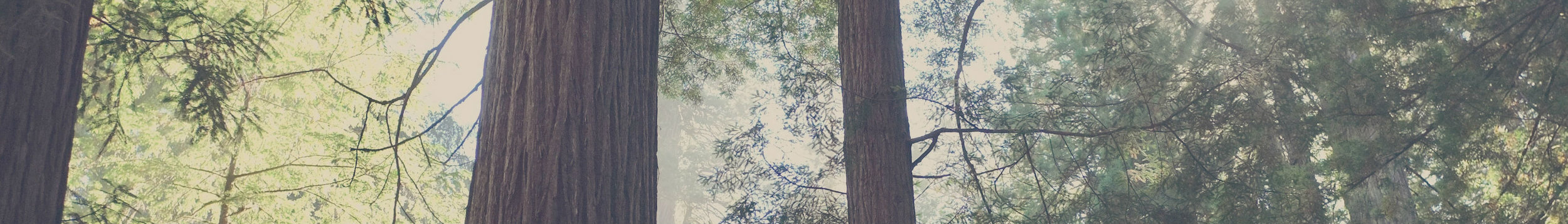 redwood thin slice.jpg