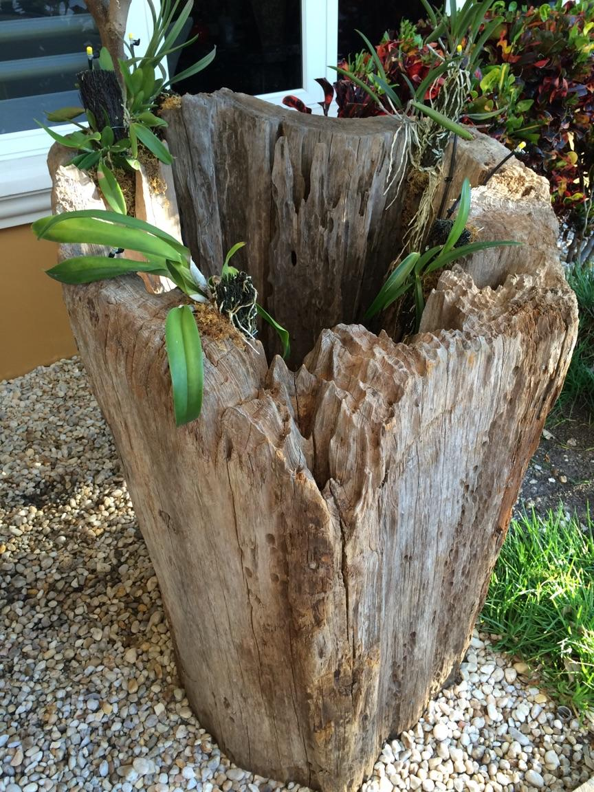 Old Growth Cypress Hollow Log as Garden Decor
