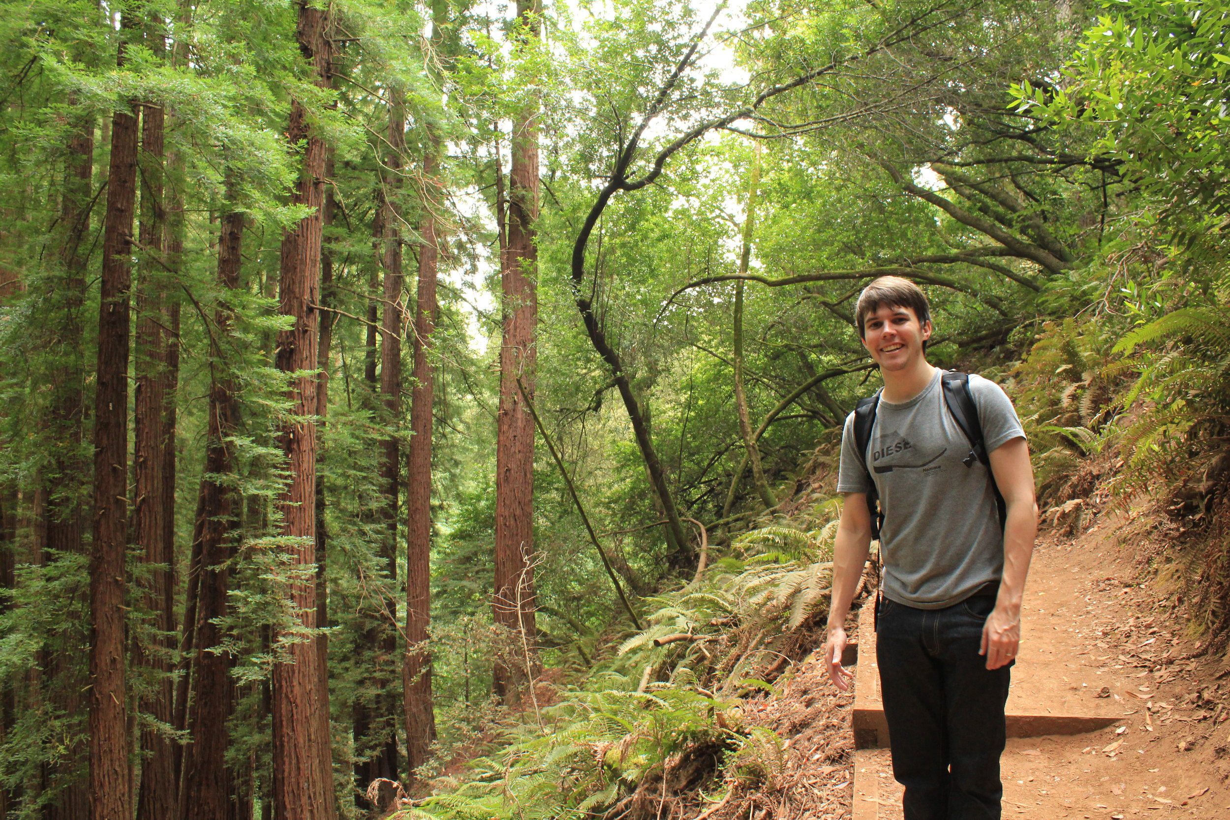 The Beautiful Muir Woods