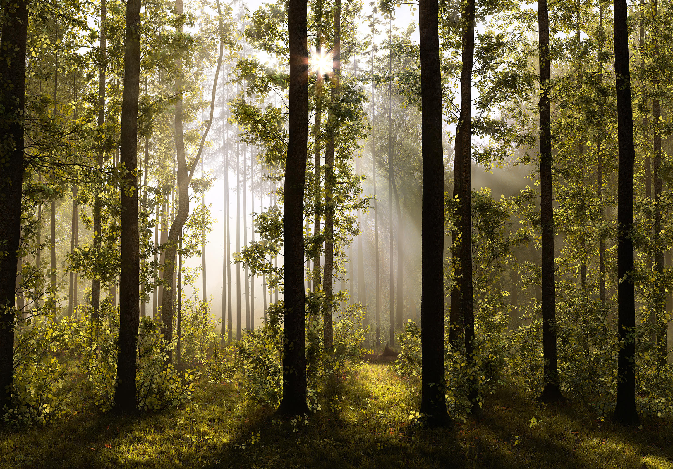 morning_forest.jpg