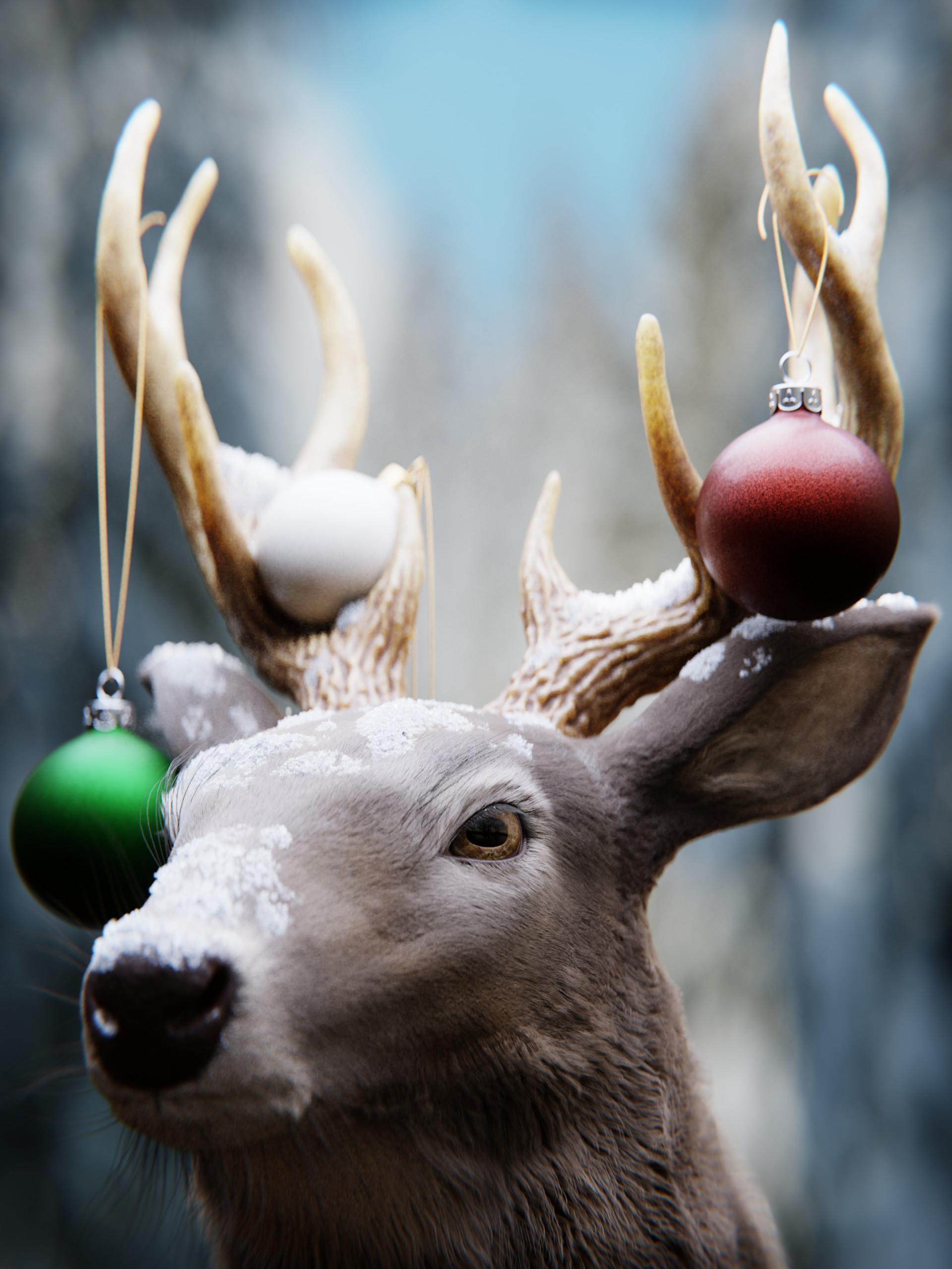 """Merry Christmas"" by Joe Lambert"