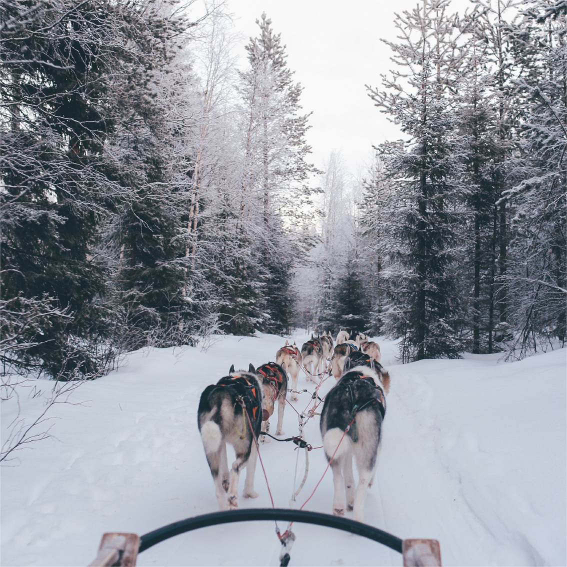 OL—Social-Lifestyle-01_Lifestyle-Dogs.png