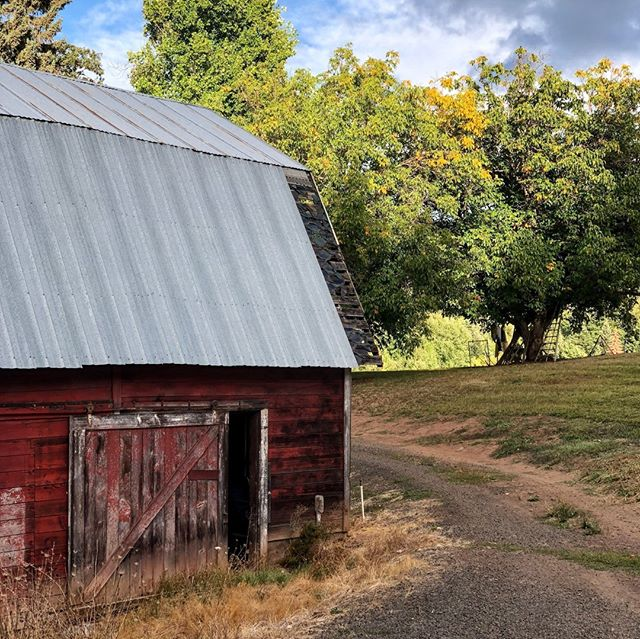 When you think of the Wanderback barn, you likely picture the big, red beauty we've shown so many times. But this! This is our lower (non - whiskey) barn. It's rustic and well-used and it's one of our favorite features on the Farm. Isn't it amazing how something so beat up can still be so full of life? #Wanderback⠀ ⠀ ⠀ ⠀ ⠀ ⠀ ⠀ #AmericanSingleMalt #PNW #MtHood #PNWlife #Exploregon #home #farmlife