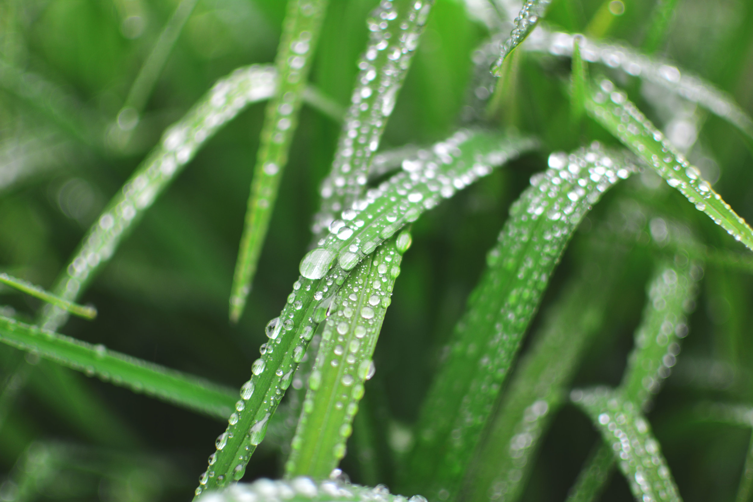 Drip drip - I am a huge proponent of rainwater for plants. It is a difference maker in plant care.