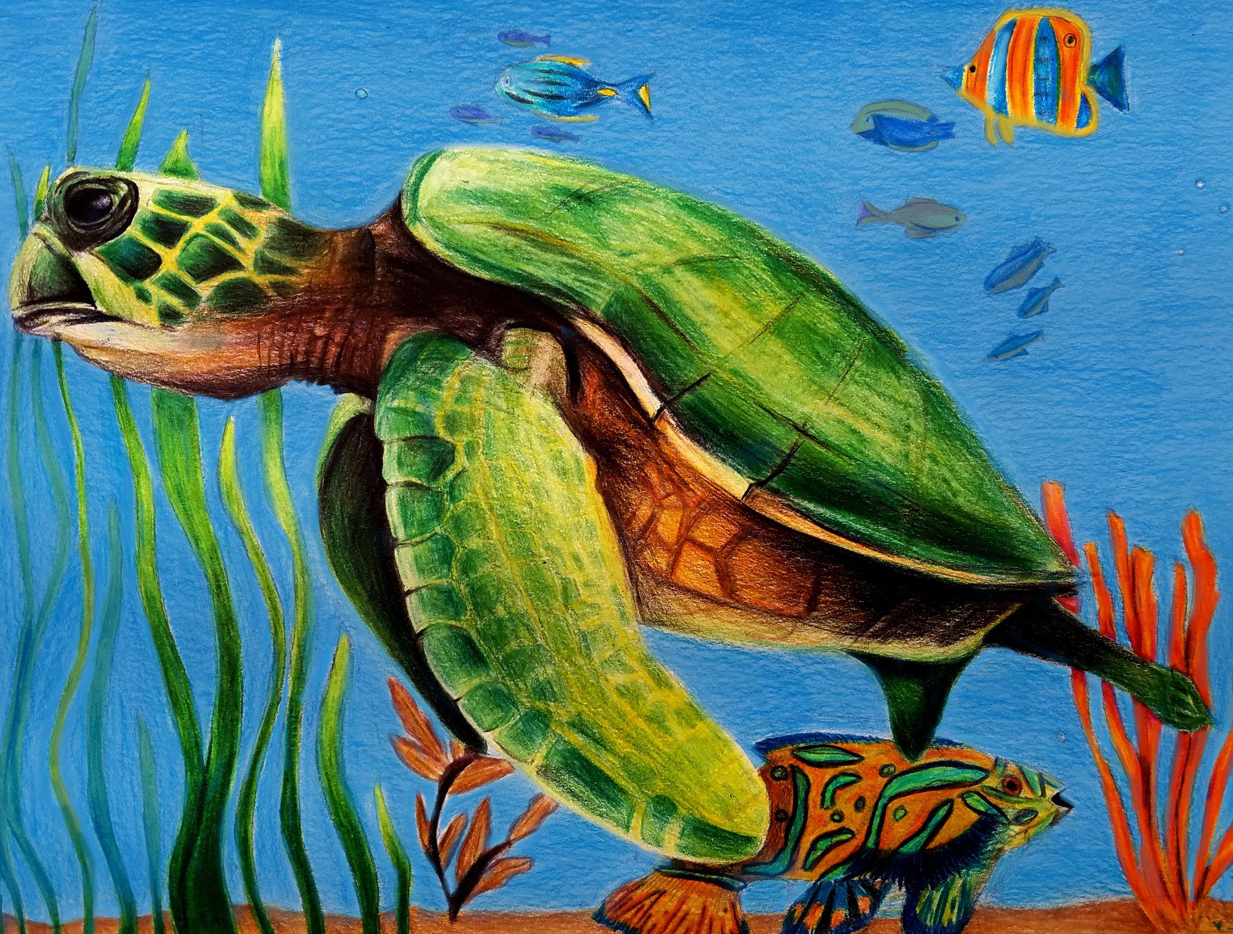 Naomi Turtle.jpg