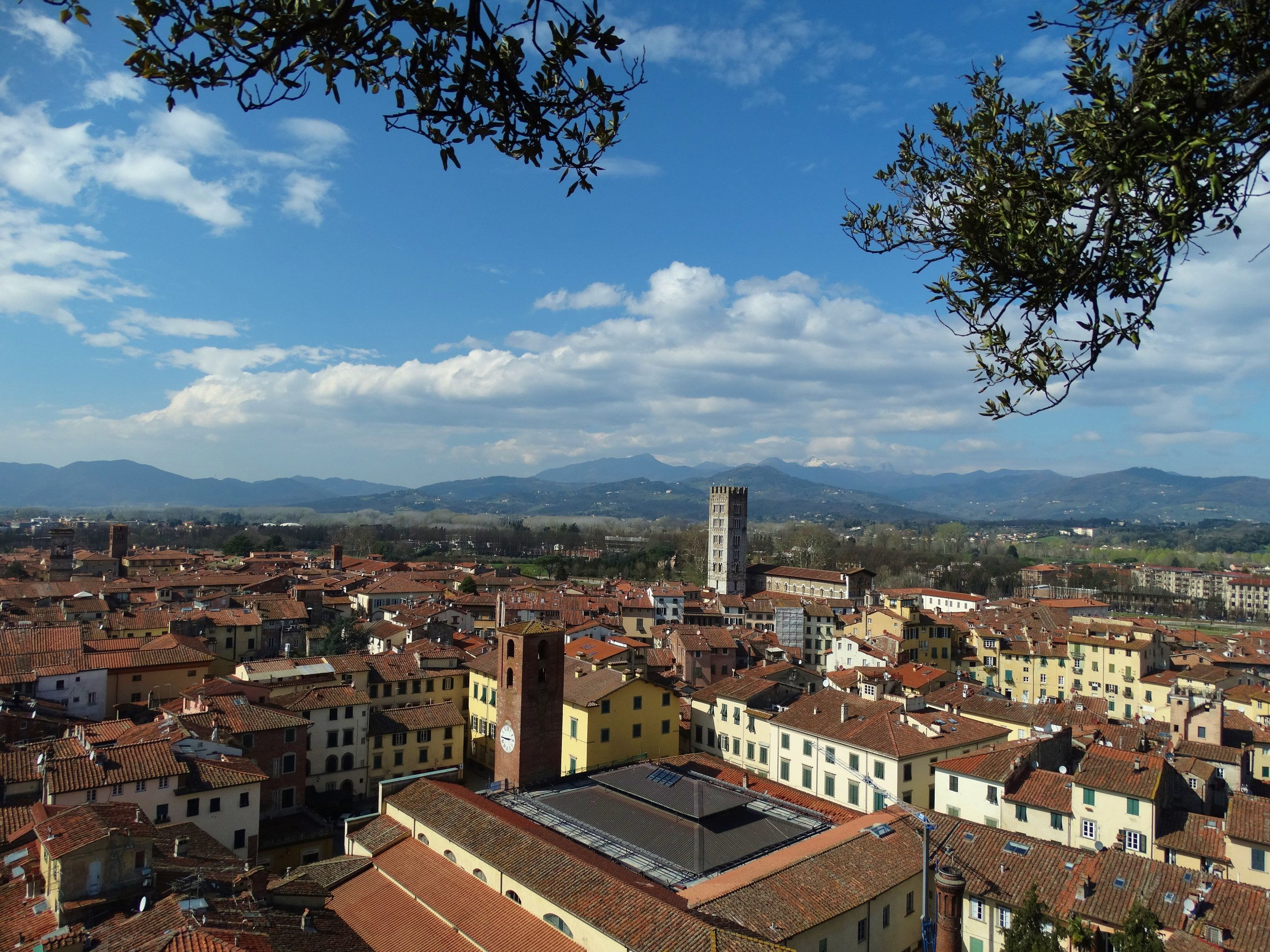 The view from the top of the Guinigi Tower