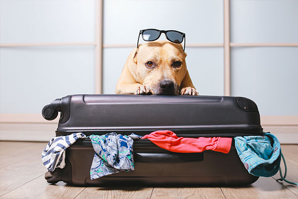 Your Dog's Packing List -
