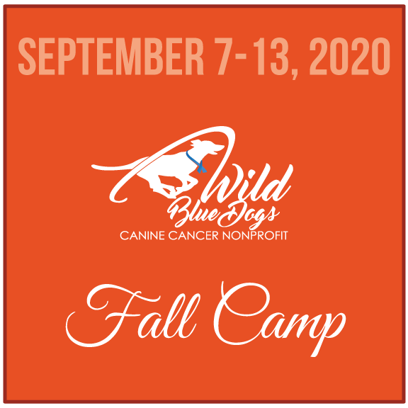 2020_Camp_Fall.png