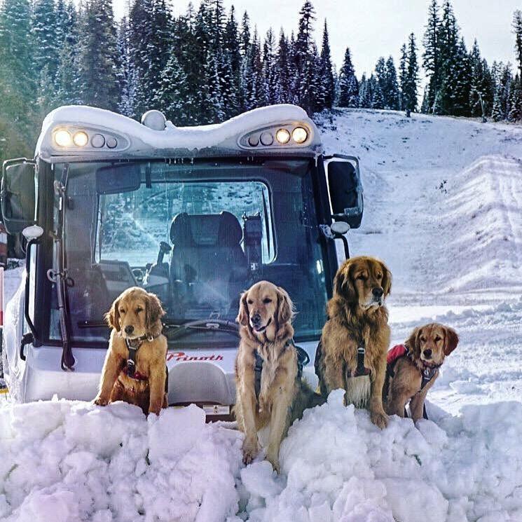 5 Avy Dogs.jpg