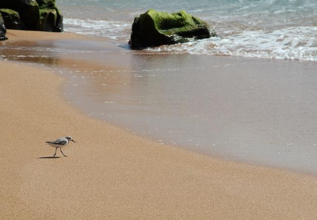 Polihua-Beach.jpg