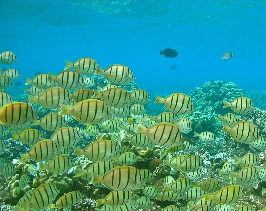 Maui snorkeling in hana