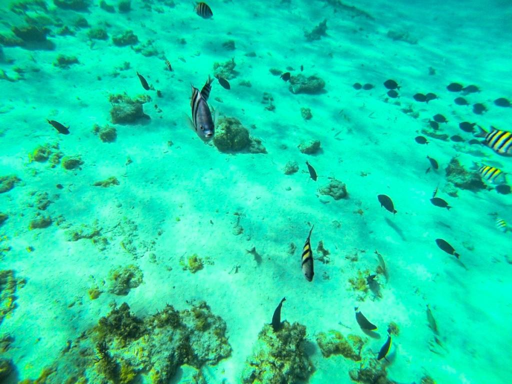 Snorkeling-fish-1024x768.jpg