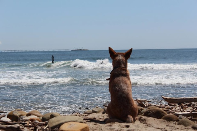 Dog-wave.jpg