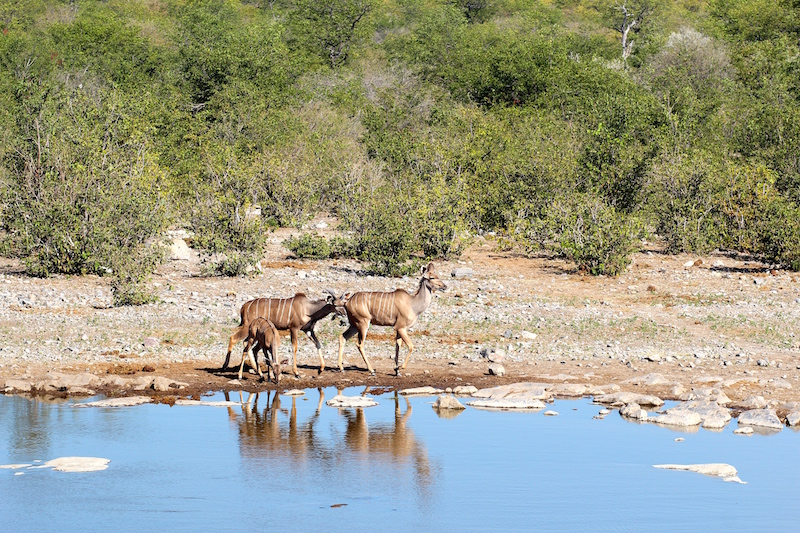 Game Drive sights at Etosha National Park