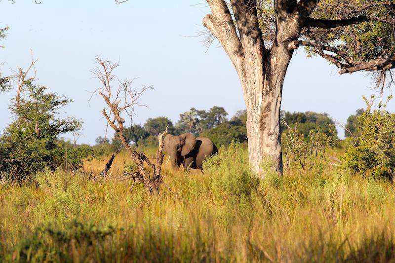 Arrival-elephants1.jpg