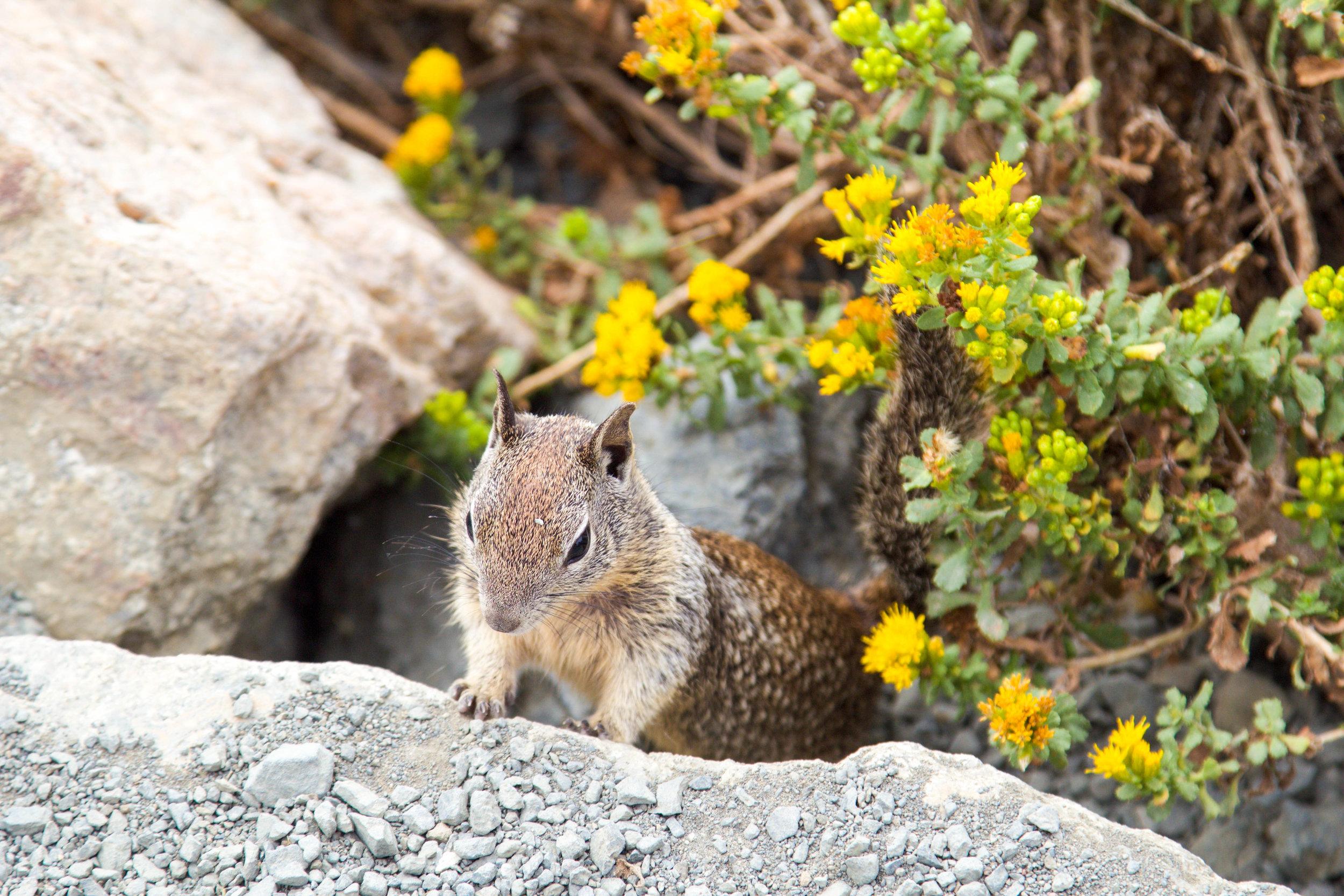 Wildlife in Big Sur
