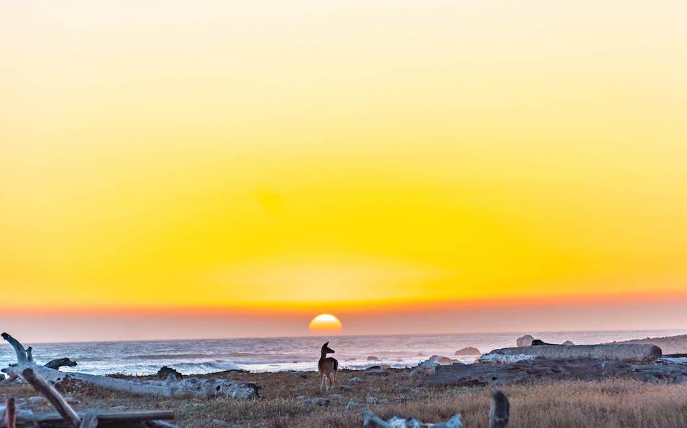 Lost Coast at sunset.jpg