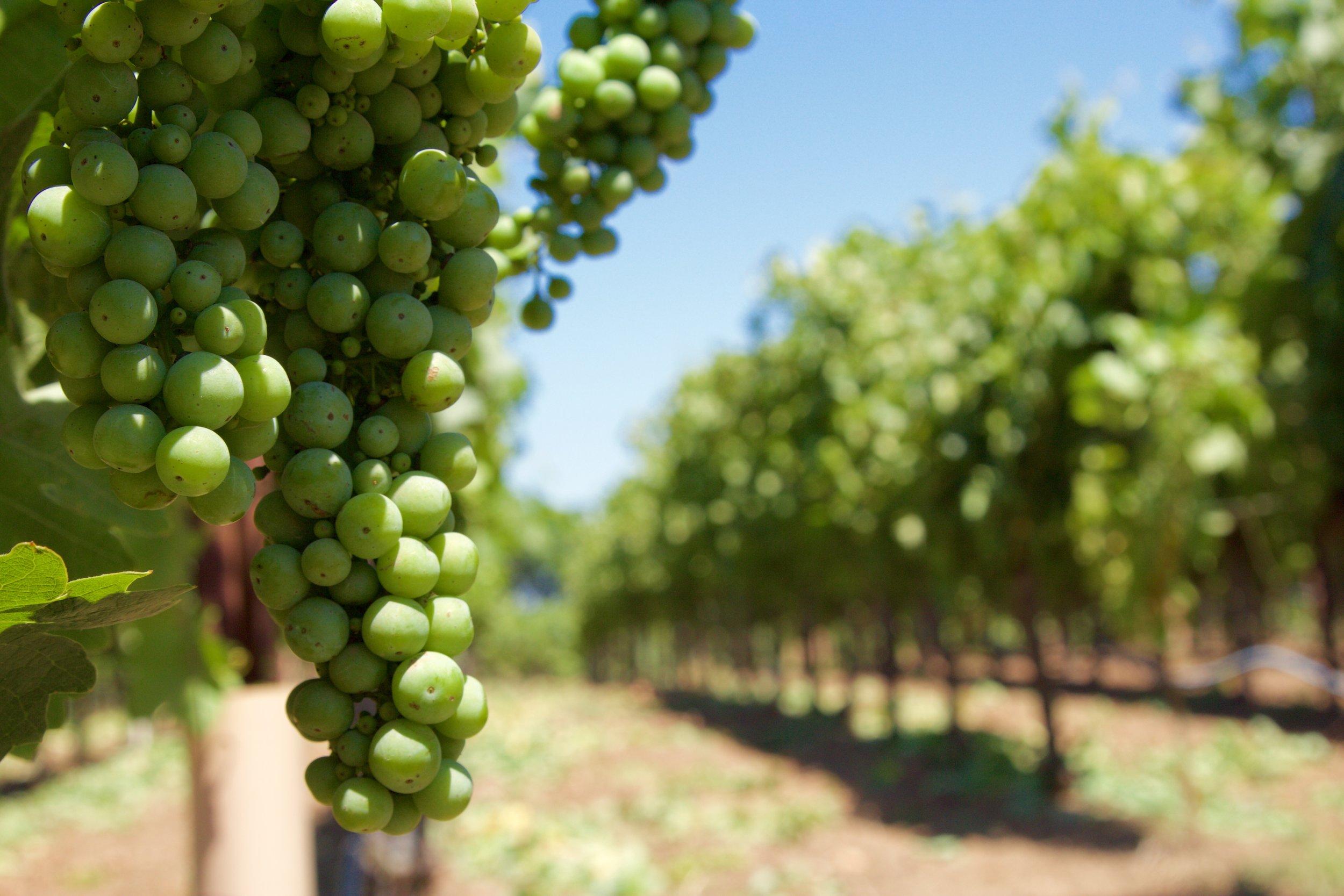 Anderson Valley Wine.jpg