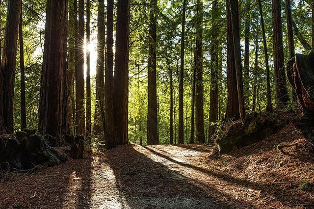 The zen of a brisk cold day in the mountains.  Deep calming breaths of earthy dankness calms the mind and it's eye. Moments that impress while lasting forever.  #zen #earth #earthy #forest #redwoods #dank #mindseye #calm #givethanks #jah #igivethanks #livinginthepositive #starburst