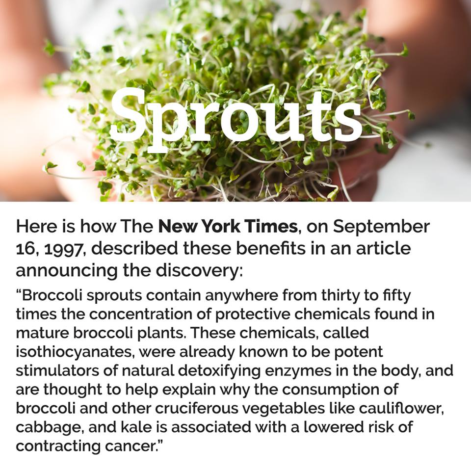 HHI Sprouts copy.jpg