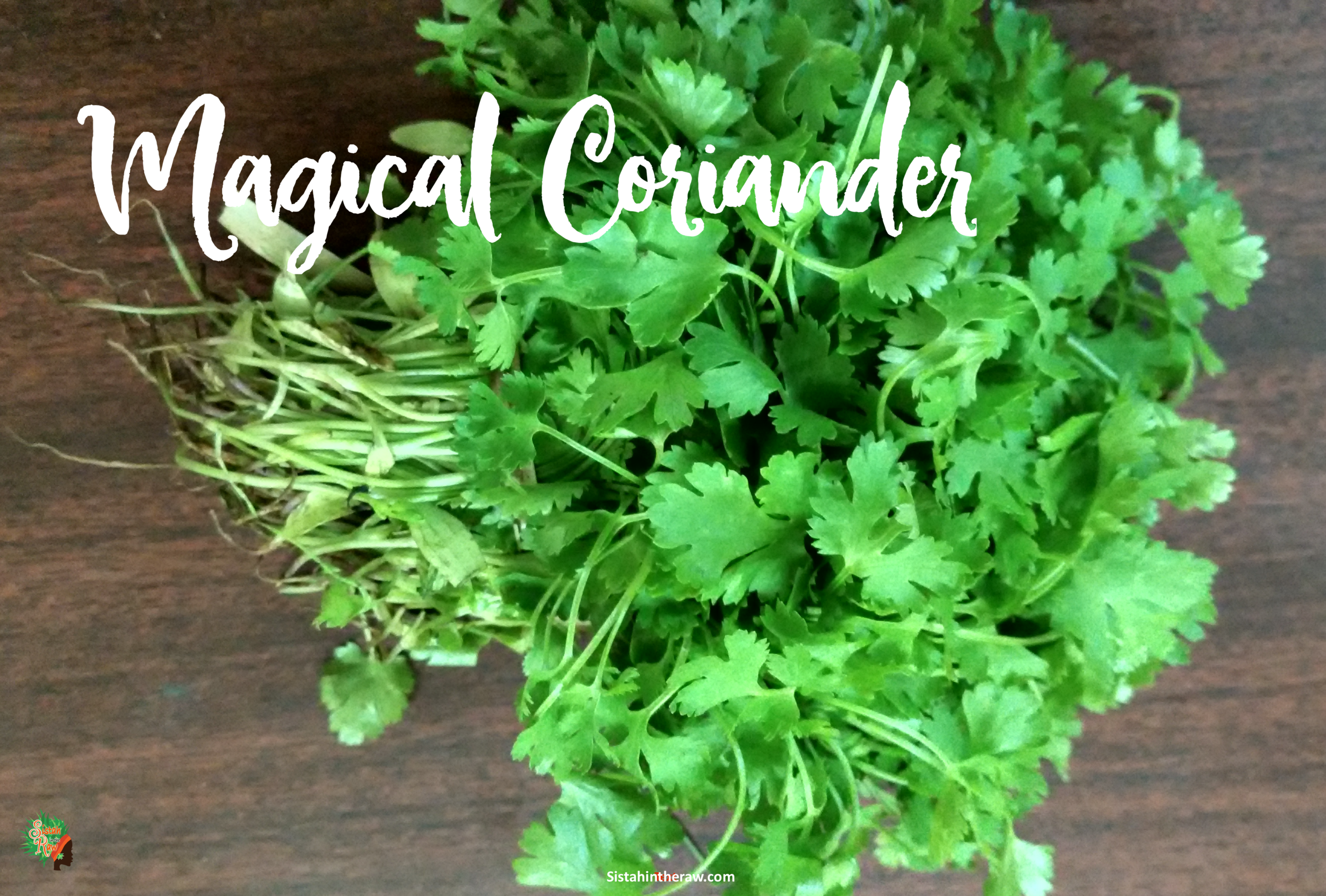 Magical Coriander.png