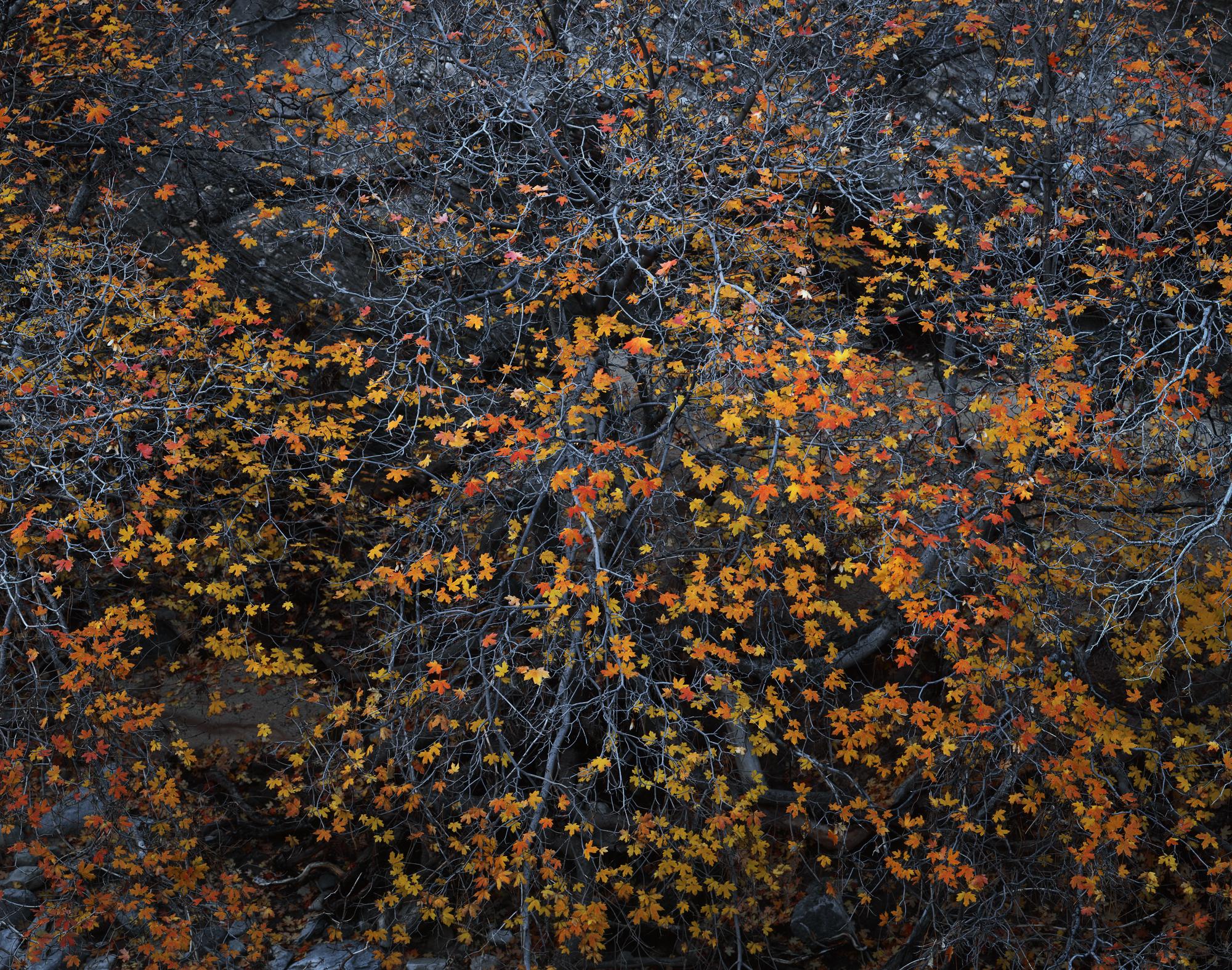 Fallen Stars  | Zion National Park, Utah