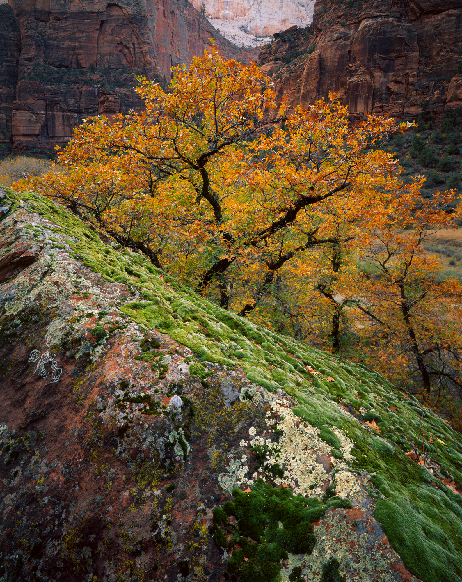 Autumn Glory  | Zion National Park, Utah