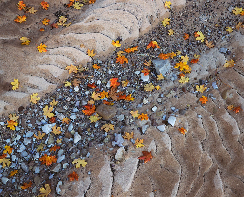 Zion's Milky Way  | Zion National Park, Utah