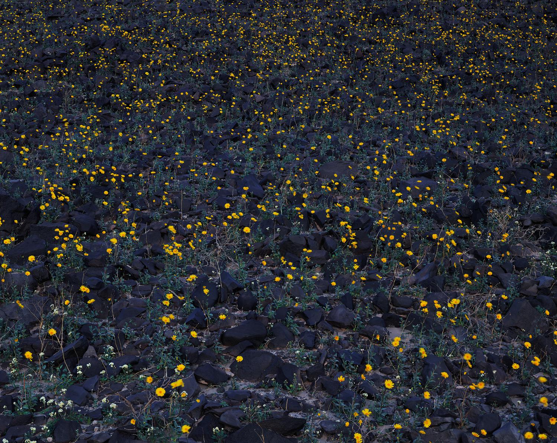 Stars Above  | Death Valley, California