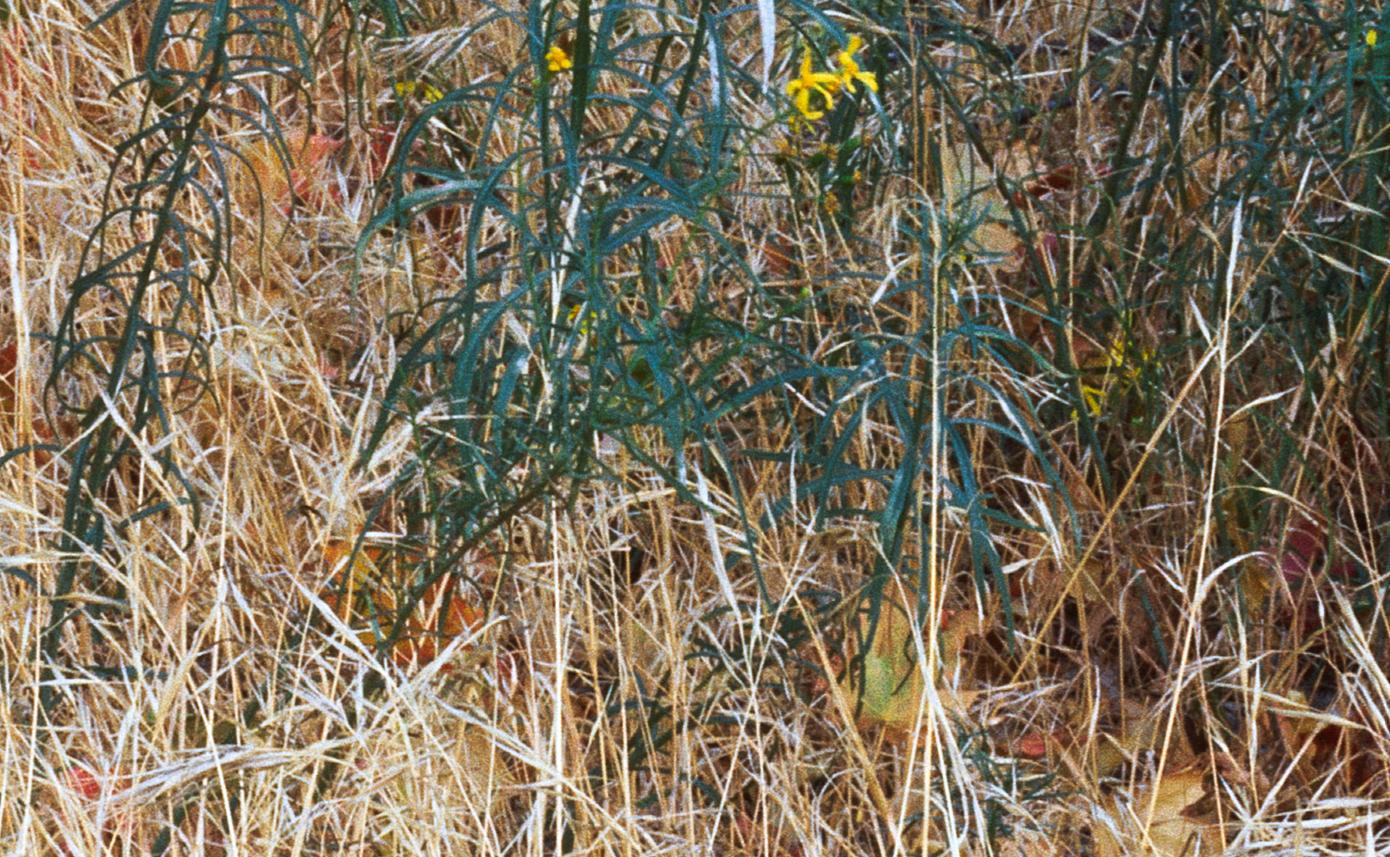 middle_grass.jpg