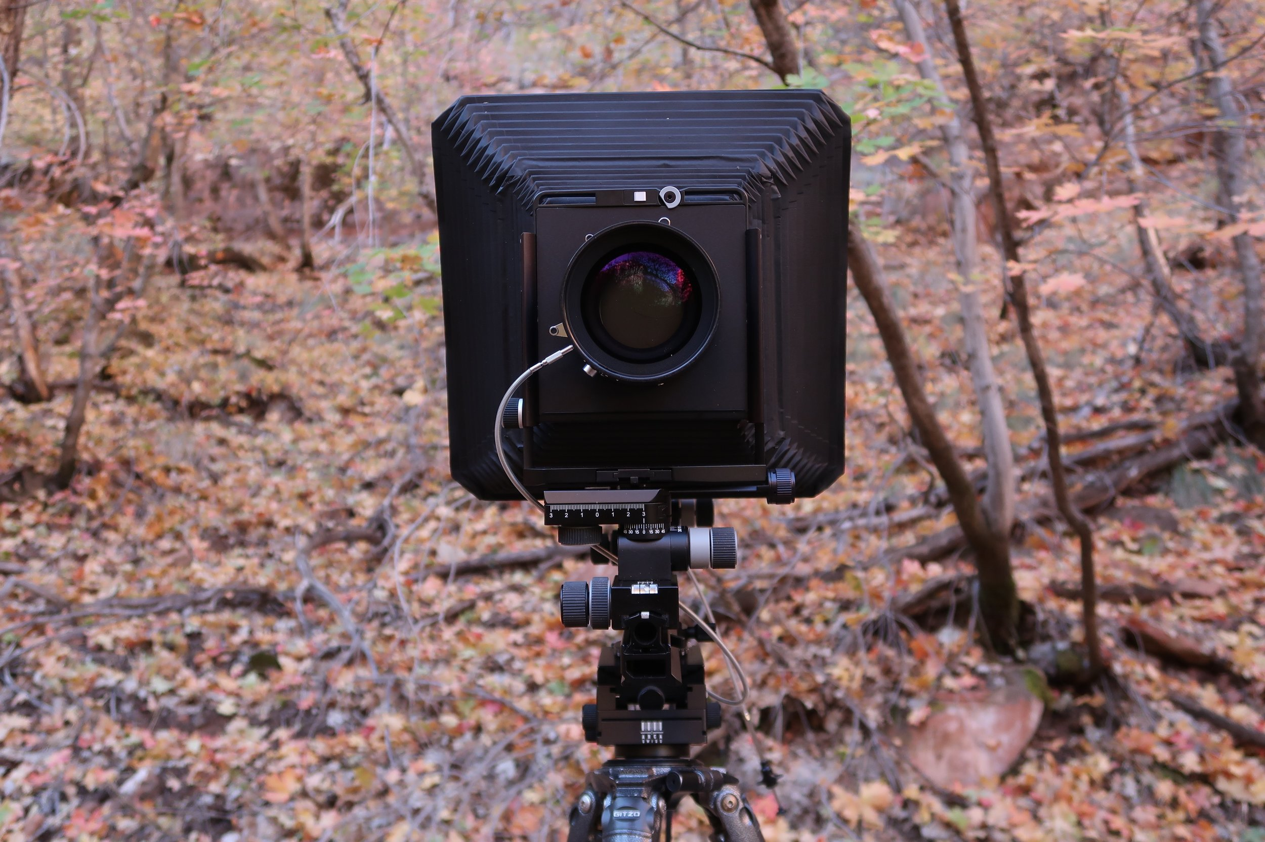 My Arca-Swiss F Metric 8x10 camera with Micrometric Orbix control, along with a Nikkor-W 300mm F/5.6 lens. The camera is mounted to a Gitzo GT3532LS Systematic tripod and an Arca-Swiss C1 Cube tripod head in one of Zion's beautiful maple groves.