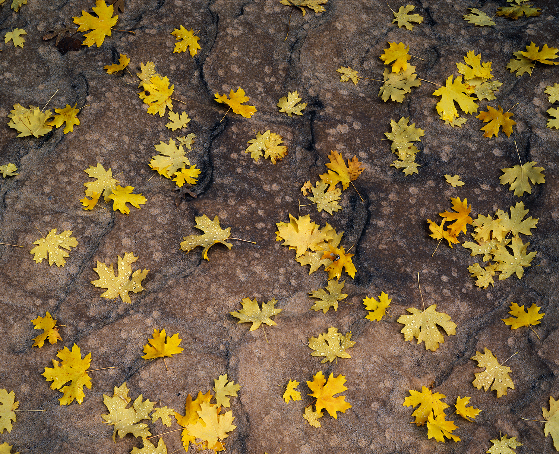 autumn_rain_drum.jpg