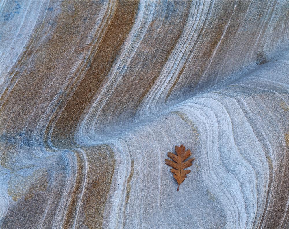 leafdreams.jpg