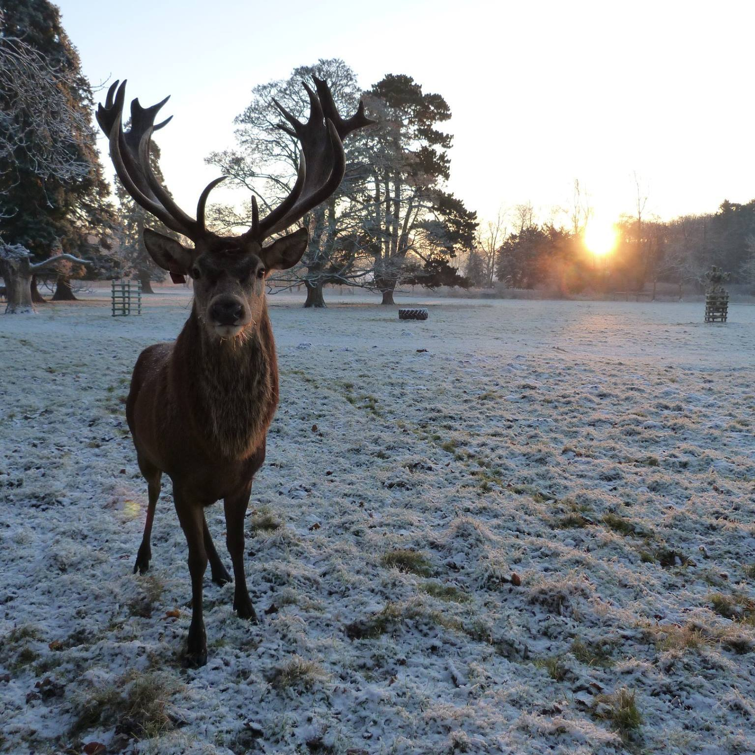 stourton deer.jpg