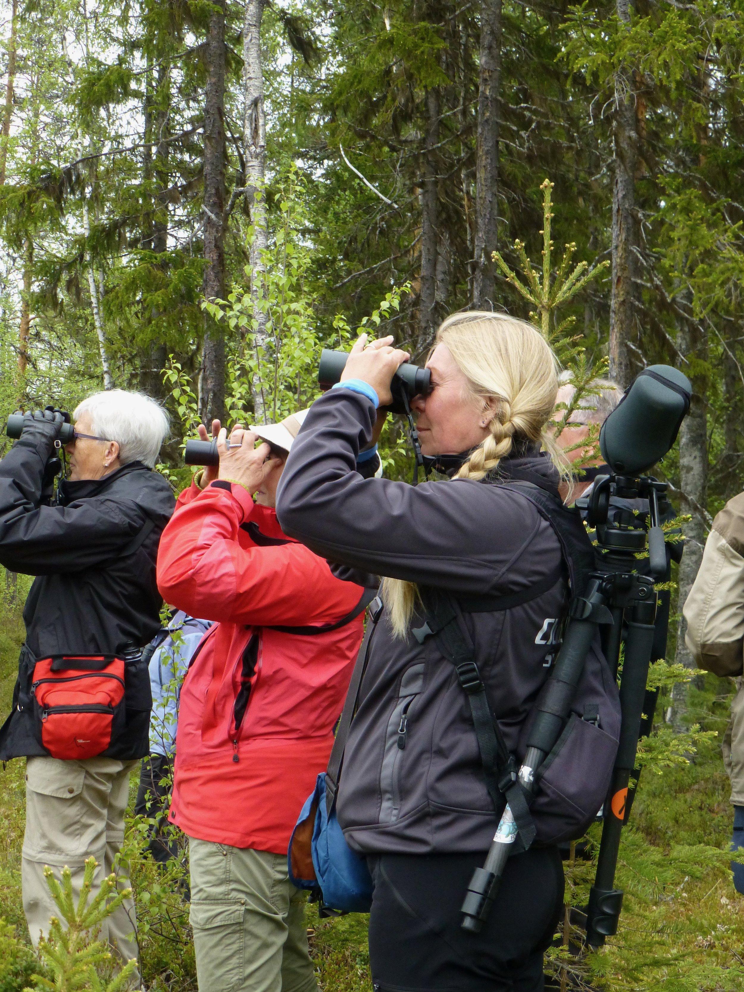 May June  Ett av Arthotel Tornedalens populäraste arrangemang är Skåda fågel med Gigi Sahlstrand, en av Sveriges få professionella skådare. Gigi är vår fantastiska guide, passionerad och kunnig och det hon inte vet om fåglar är inte värt att veta. Nu i februari kan vi se Gigi på SVT i en serie om fågelskådning.  Vill du också börja skåda eller lära dig mer om fåglar ska du anmäla dig redan nu till 2018 års fågelskådning.Vi tar emot tio personer och till femårsjubileet år 2017 är det fullt.   Skåda fågel