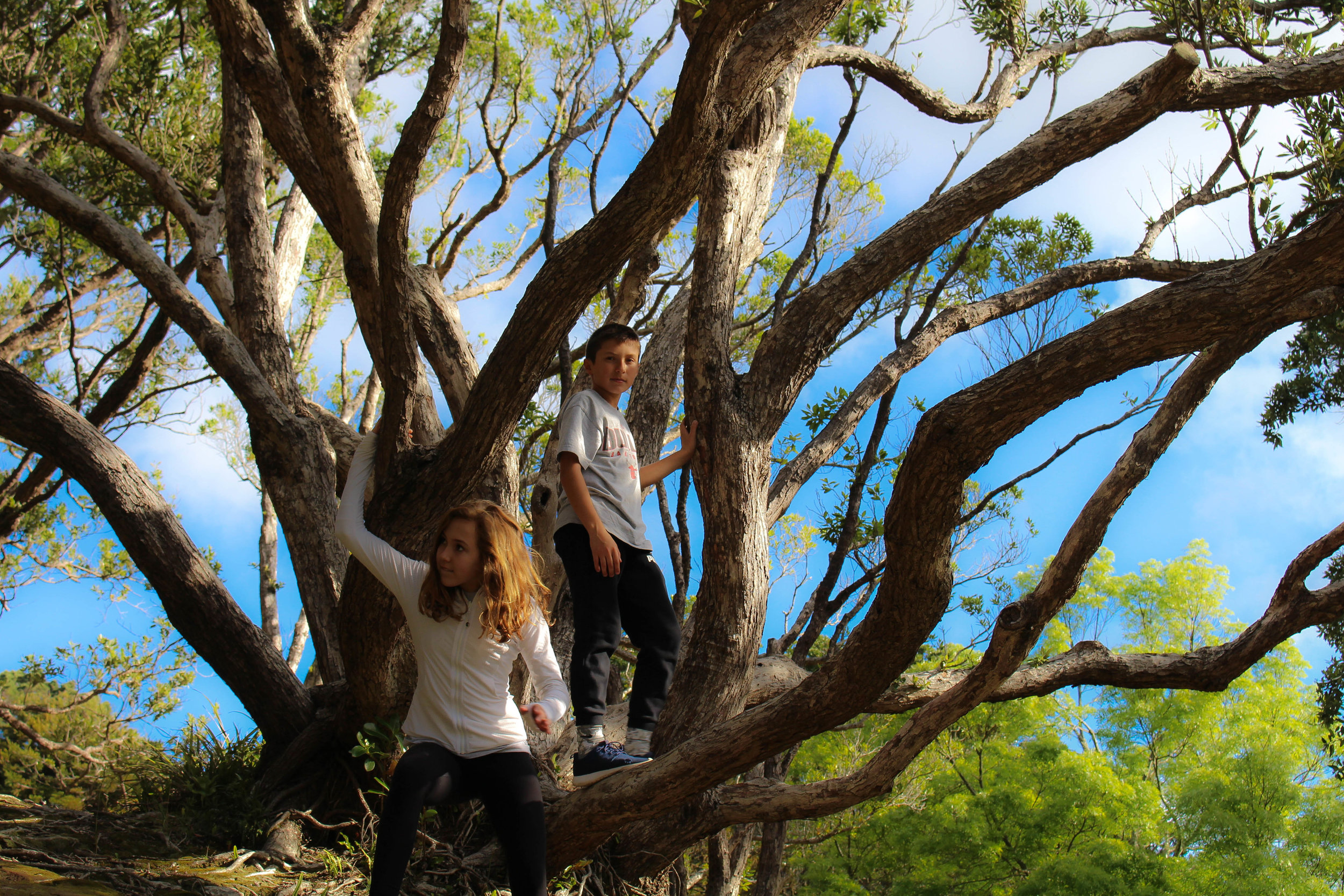 kids-in-tree-1-of-1
