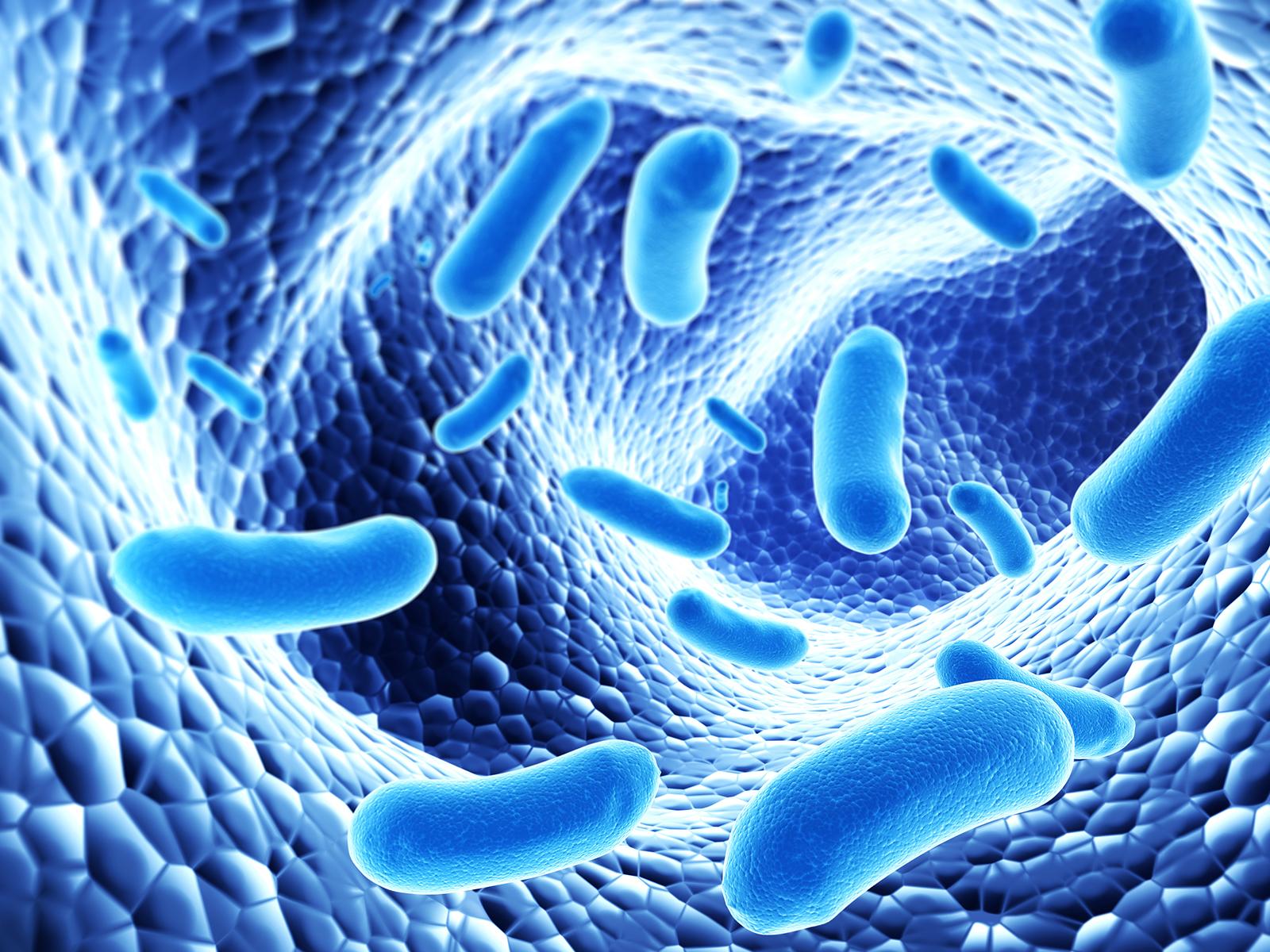 Probiotics -