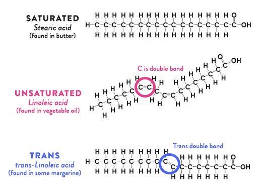 fats diagram.jpg