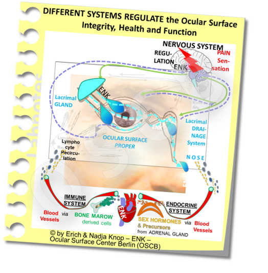 Different Systems regulate the Ocular Surface