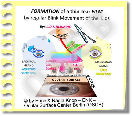 BLINKING   transforms the TEARS  into the Tear FILM