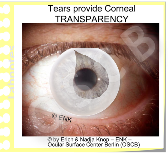 TEARS  provide the  MOISTURE  of the Mucosal Ocular Surface, that is a  pre-requisite  for its TISSUE INTEGRITY and thus for  CORNEAL TRANSPARENCY .