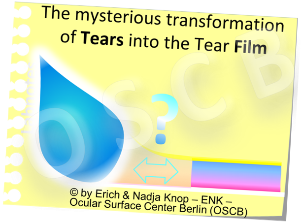 OSCB-Bild_1.2._The MYSTERIOUS TRANSFORMATION of TEARS into the Tear FILM .png