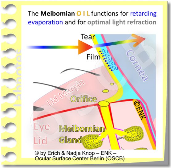 The main functions, among probably many others, are the retardation of evaporation of the aqueous phase, the water of the tear film, by sealing the tear film like a lid on a pot of warm water. A second important function is to provide a very smooth and homogeneous surface for the air-to-tear interface that is the main refractory surface of the eye. It provides about 3/4 of the refractive power of the eye.