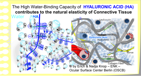 Individual  Hyaluronic Acid (HA)  molecules with lots of bound water molecules are seen in the left image. On the right side the loose connective tissue of the Conjunctival Lamina propria is shown - where HA acts as a spacer between the collagen fibers (grey) and HA thus provides a certain elasticity to the tissue.