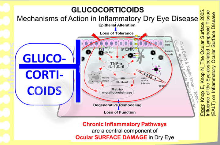 Glucocorticoids  are mighty own hormones of the body for the maintenance of chronic stress. Therefore they are involved in many different processes and they also block almost all steps of inflammation very effectively. Due to their pleiotropic action on many systems the also  have many potent side-effects  even in topical use at the ocular surface,  particularly when given ´ too long ... and too much ´ .