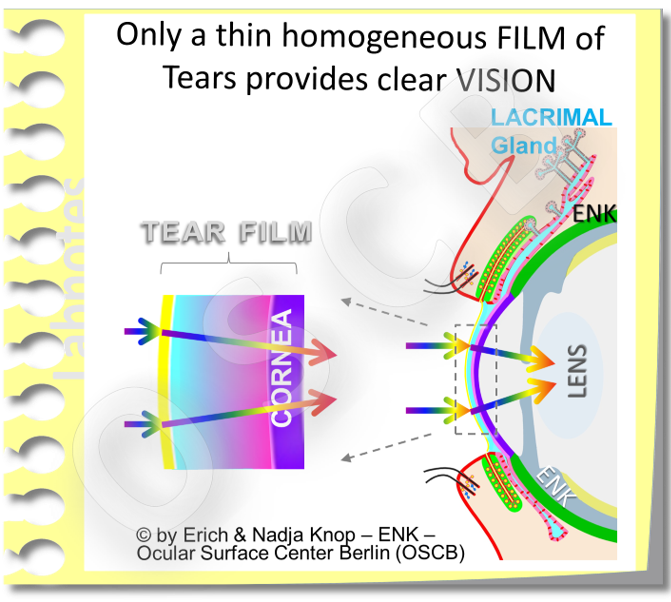 The view of pro-ocular Tear FILM as a basically three layered liquid film is the leading concept for roughly the last 70 years since  Eugene WOLFFS  original description in 1946 ... and this concept still appears to hold true.