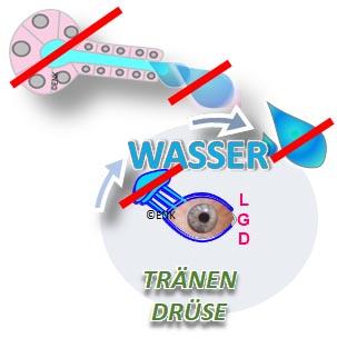 BildELEMENT WÄSSRIGE Tränendrüse Trockenes Auge, Dry Eye .jpg